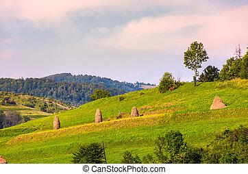 haystacks on grassy slopes in rural area. lovely...