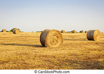 Haystacks on the field. Summer, rural landscape.