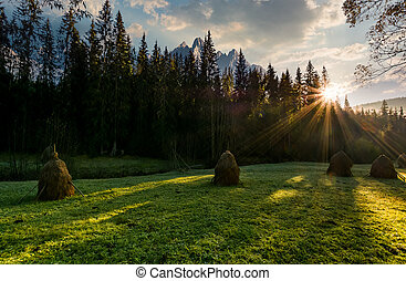 haystacks on the forest meadow in High Tatras - haystacks on...