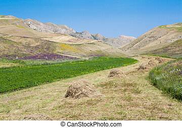 Haystacks on the grain field after harvesting