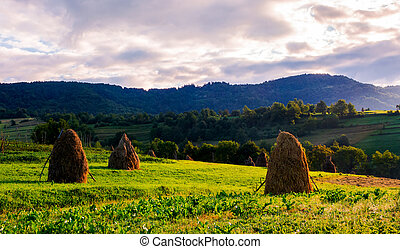 haystacks on the grassy field in mountains. lovely summer...