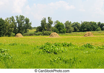 Haystacks on the meadow