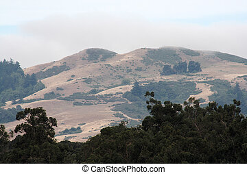 haze and fog in the California foothills