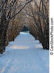 Hazel tree avenue a winter day