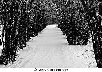 Hazel tree avenue on a winter day