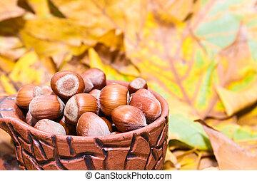 hazelnoten, in, herfst