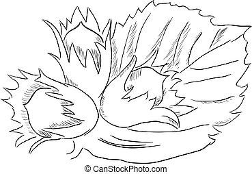 Hazelnut - Figure hazelnut foliage. Vector illustration is ...