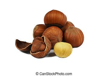 hazelnut in shell and peeled walnut