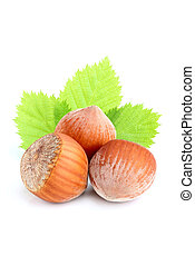Hazelnut in shell with leaves.