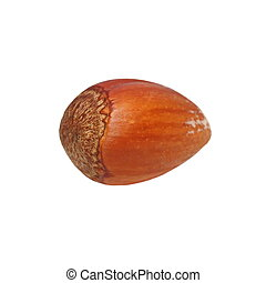 hazelnut isolated on white
