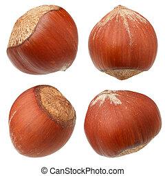 Hazelnut nuts isolated on white background