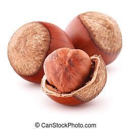 hazelnut or filbert nut isolated on white background cutout...