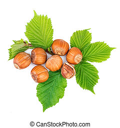 Hazelnut or filbert nuts with leaf