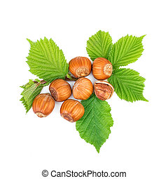 Hazelnut or filbert nuts with leaves on white