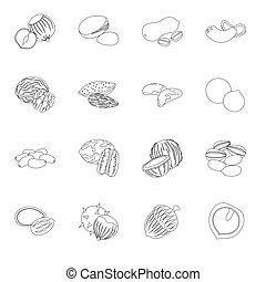 Hazelnut, pistachios, peanuts and other types of nuts.Different types of nuts set collection icons in line style vector symbol stock illustration web.