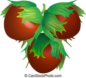 Three vector hazelnuts for design
