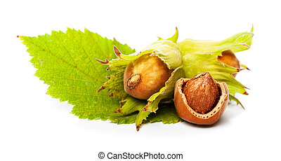 hazelnut with green leaf isolated on white
