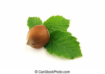 Hazelnut with leaf