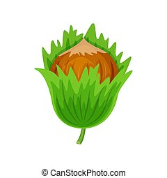Hazelnuts in green leaves vector illustration isolated on white background.. Vector nuts