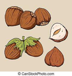 Hazelnuts in hand-drawn style. Vector illustration.