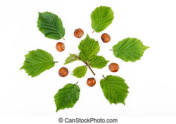 Hazelnuts with leaves isolated on white background. Top view.