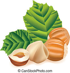 Hazelnuts with leaves. Nuts on a white background. Vector...