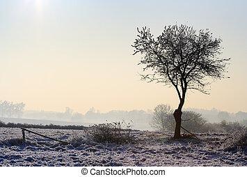 Hazy winter landscape with lonely tree in backlight