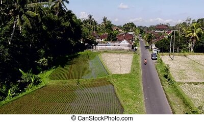 HD aerial drone footage of flying over rice fields in Ubud area, tropical island of Bali.