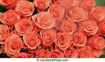 HD - Bouquet of red roses