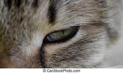 HD: extreme macro close-up of a cat's eye