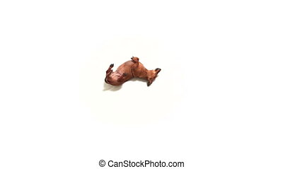 HD - Funny dog. Dog dance lying on a floor
