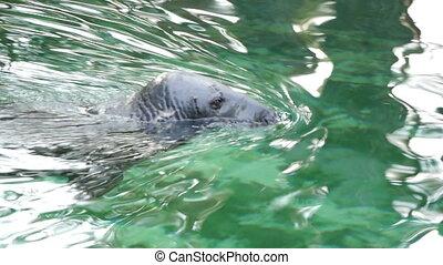 HD - Grey Seal_scene 2