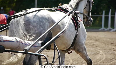 Harness Racing. rear view - HD - Harness Racing. rear view