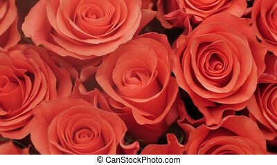 HD - Red roses