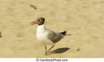 HD - seagull on the beach scene2