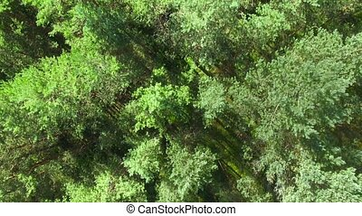 HD - Top view on a the Pine Forest