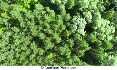 HD - Top view on the Forest. Aerial