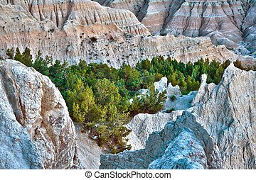 HDR Badlands Forest