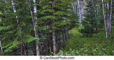 hdr, forêt