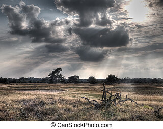 HDR image of a nature reserve with dead tree in front