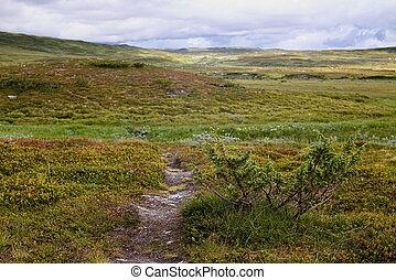 HDR image of Landscape in Skaarnja Nature Reserve in Sweden