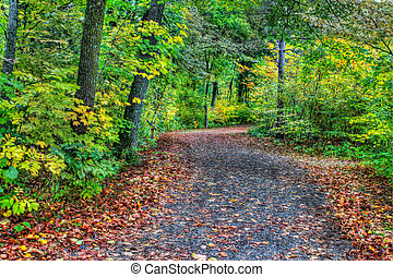 HDR of a forest path in soft focus