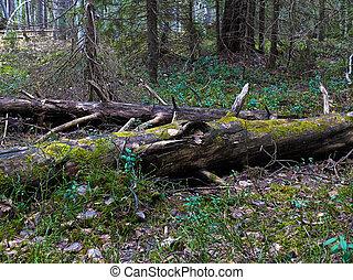 HDR photo of broken tree