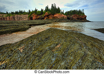 HDR St Martins Caves Seaweed - HDR image of caves and...