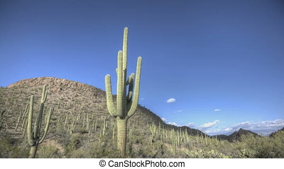HDR Timelapse Arizona Cactus with a blue sky while clouds...