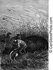 He cut the tusks, vintage engraving. - He cut the tusks, ...
