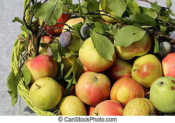 he wicker basket with apples and plums