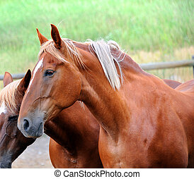 Head and Shoulders - Two horses stand together in a corral...