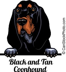 Head Black and Tan Coonhound - dog breed. Color image of a ...