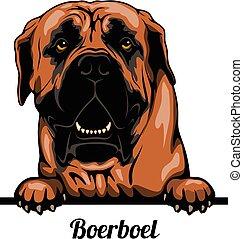 Head Boerboel - dog breed. Color image of a dogs head ...